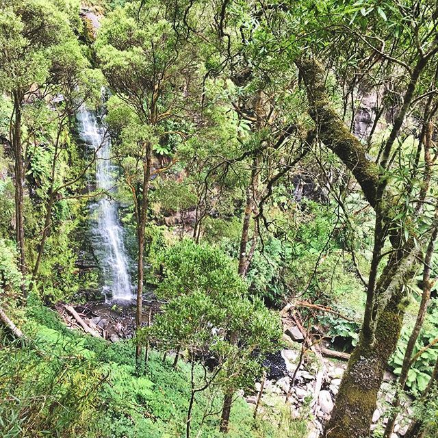 Can't do an Aussie road trip without visiting a cheeky waterfall! 💦 by (jemma.loka). lifeofatourguide #travelwithmeaning #waterfall #seeaustralia #worldcaptures #travel #backpackers #australiantourism #vic #thisisloka #greatotwaynationalpark #lokatravel #victoria #beautifuldestinations #travelling #travelgram #instatravel #greatoceanroad #tourism #loka #lorne #erskinefalls
