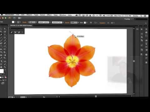 How To Use The Pen Tool in Adobe Illustrator, Photoshop and InDesign. Terry White tutorial.
