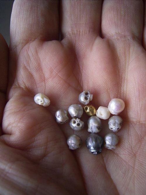 tiny skulls made from pearls by Shinji Nakaba