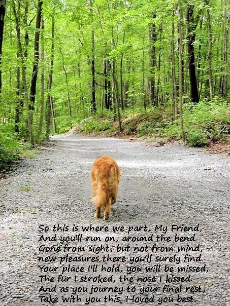 To all my dogs who I'll see at the Rainbow Bridge