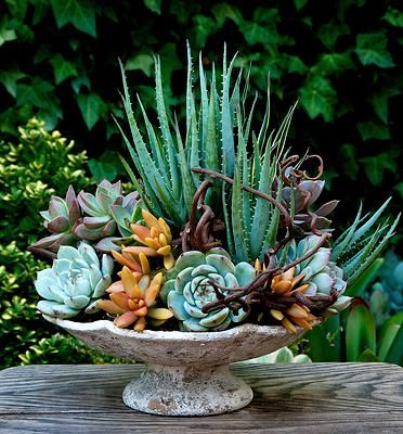 'Floral-Style' Succulent Container