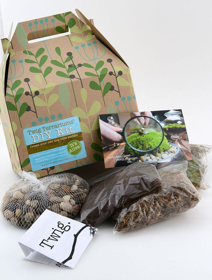 Terrariums are a great way to keep gardening all year long, and this D.I.Y. terrarium kit makes it easy to get started!