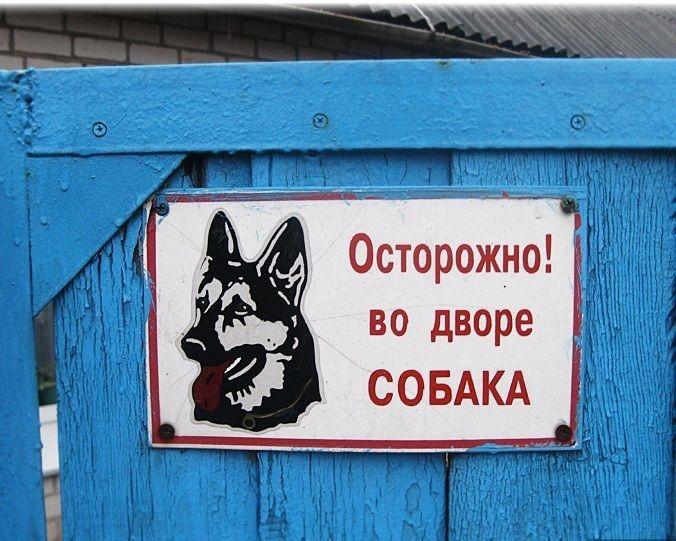 картинки с осторожна собака не стерильна воедино