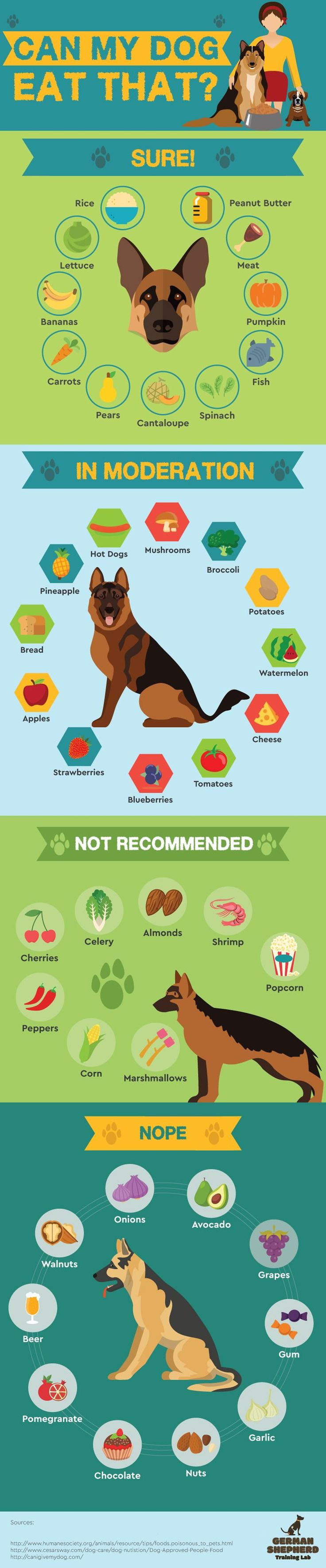 Safe Human Food For Your Dogs Info Graphic Everything you want to know about GSDs. Health and beauty recommendations. Funny videos and more