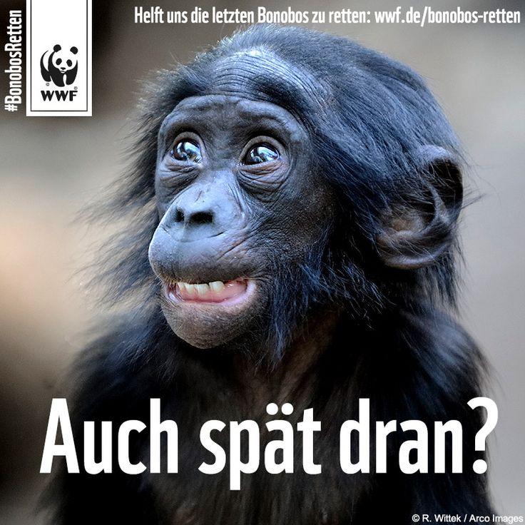 Bonobo die panspermatheorie 2 6