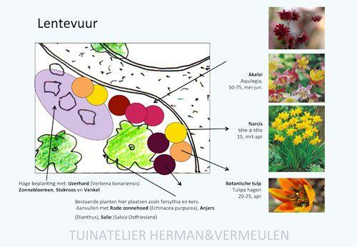 lentebloeiers voor tuin zuid-westen