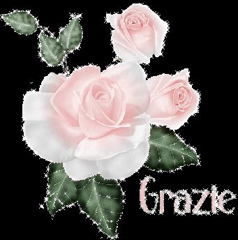 Grazie + rosa rosa