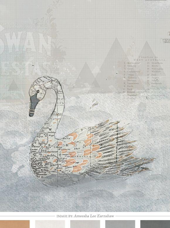 Swan colour: Inspiration, Savages, Art Prints, Illustration, Lee Earnshaw, Collage, Swan, Ameesha Lee