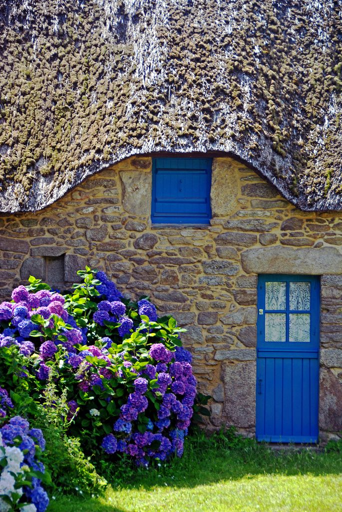 French Countryside - Blue/purple Hydrangea plants, in front of stone home, in Saint-Lyphard, France. ~ (Via: CromagnodePeyrignac - flickr)