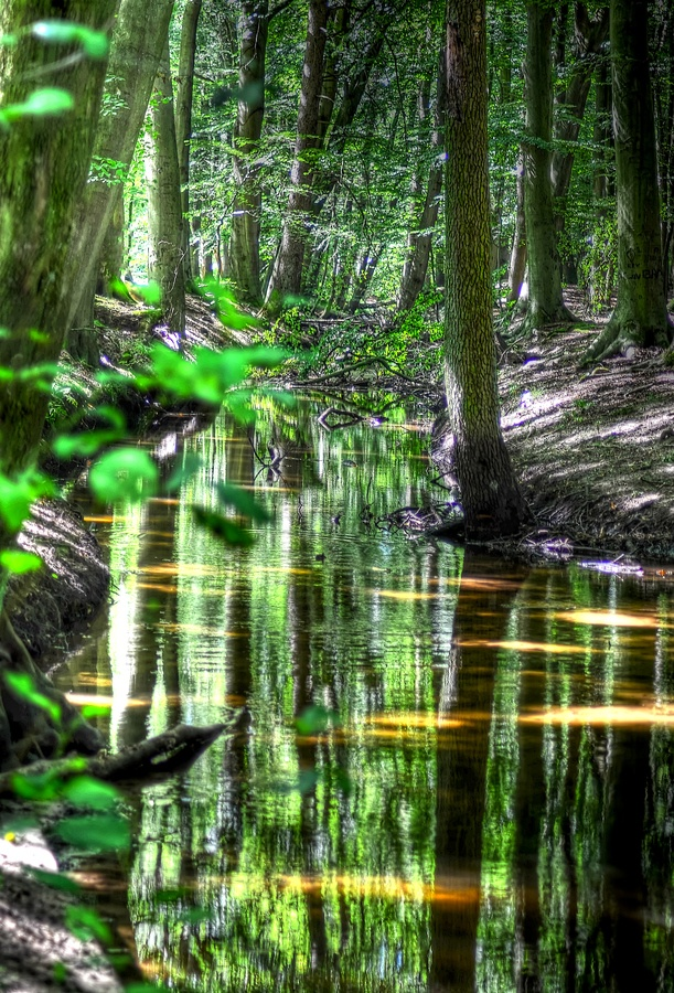 Forest reflections.. by Ton le Jeune, via 500px