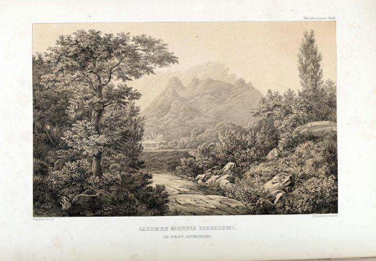 """carl friedrich philipp von martius - illustration plate from """"flora brasiliensis"""": 'cacumen montis itacolumí, in prov. minarum.'"""