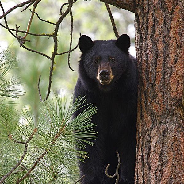 1040 Best BEARS (Beren) Images On Pinterest