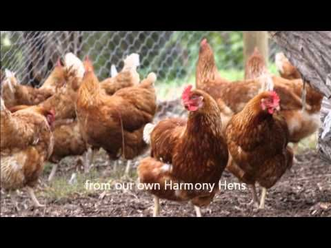 A taste of Harmony B&B