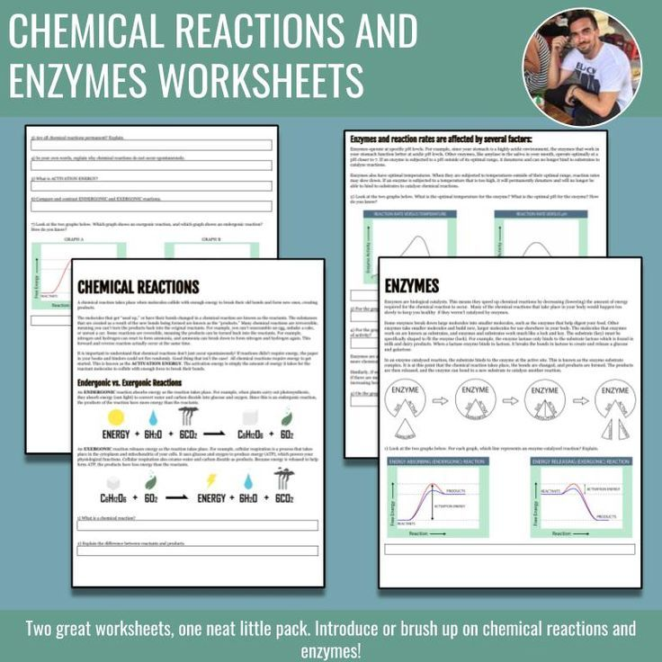 Chemical Reactions And Enzymes Worksheet Bundle With Images