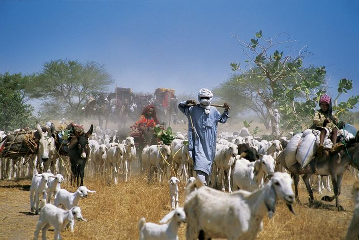 Nomad Caravan, Chad Photo by David Evans — National Geographic Your Shot