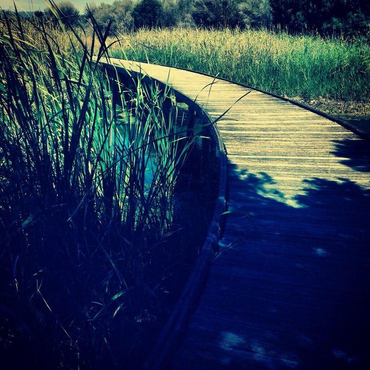 Mawson Lakes Wetland. Great picture via Twitter by @mama_vivar #salisbury #adelaide. Taking whilst out walking #MawsonLakesWetlands