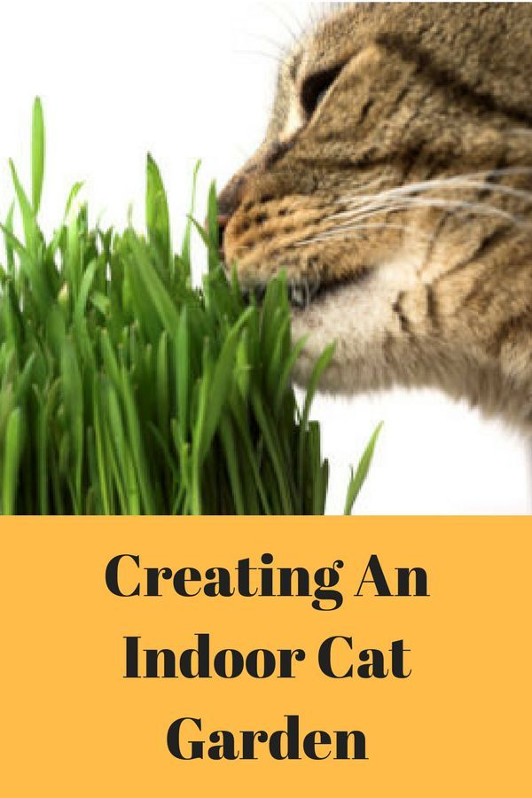 Spring is almost here and people are thinking about planting their garden. Cats often like plants too, an indoor cat garden can be a source of enjoyment.