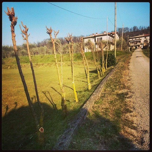 #house #country #green #grass #trees #nature #instanature #instamoment #filare #horse #walking #skyporn #sun #light #beauty #colours #novellaorchidea #novella #orchidea #raccontierotici #racconti #ebook #ricardo #tronconi #eroticnovel #landscape