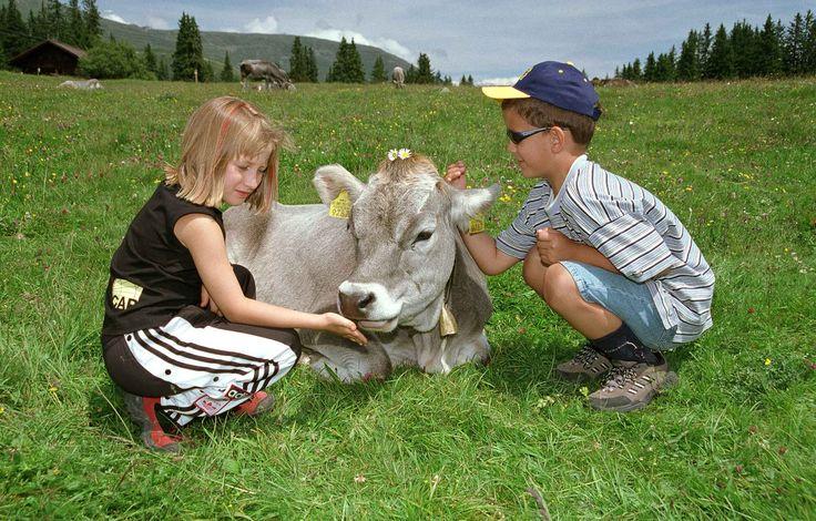 Wist je dat #Slovenië na Finland het groenste land van #Europa is? Vergeet dus de stadse drukte en schakel over op het prettige ritme van het Sloveense #boerenleven! Bij vakantieboerderij Firbas voel je je echt welkom. Geniet van de weidse omgeving, van de vele sportieve activiteiten in de omgeving, of laat de kinderen meehelpen met het verzorgen van de dieren. #boerderijvakanties