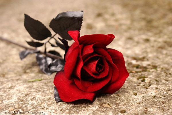 ورود رومانسية ورد طبيعى ورود الحب ورود متحركة ورد خشن صورورود وقلوب متحركة ورد الجوري صورورد جوري احمر Red Roses Wallpaper Rose Wallpaper Red Roses