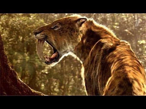 Доисторические хищники — Саблезубый Тигр смотреть онлайн