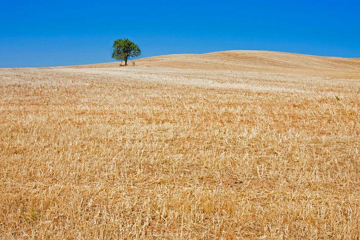 Raccontarlo in poche righe è impossibile: il cammino è un momento per riflettere sulla propria interiorità, ma anche per godere della varietà di panorami naturalistici che le regioni della Spagna offrono (foto: Alamy/Milestonemedia)