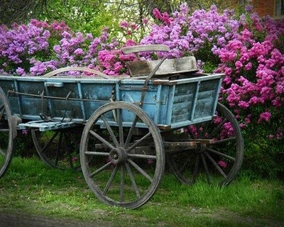 Old Wagon By The Springu0027s Lilacs.