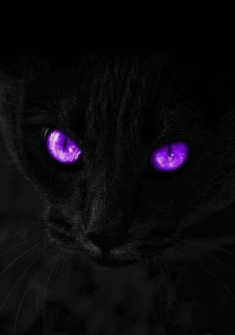 Awesome purple cat eyes