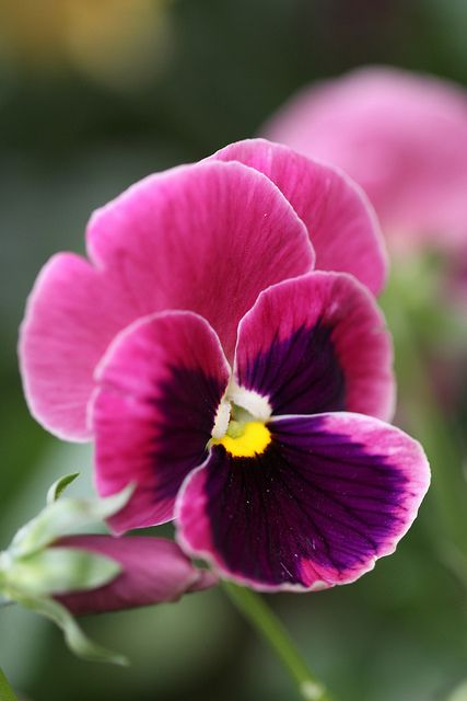 """And there is pansies, that's for thoughts."" Ophelia gives out pansies to represent thoughts and faithfulness."