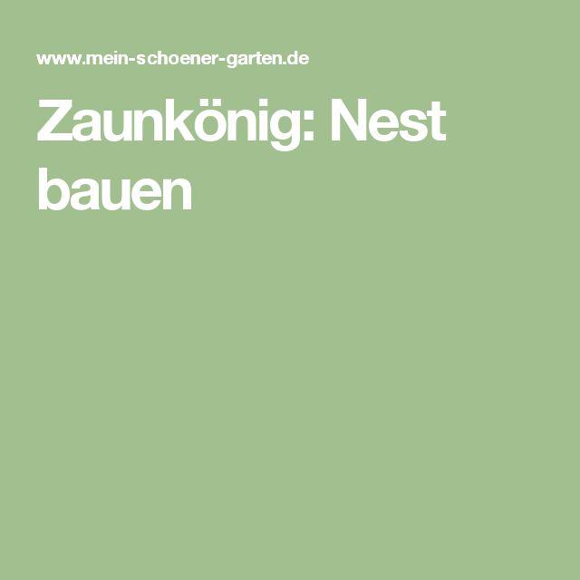 Zaunkönig: Nest bauen