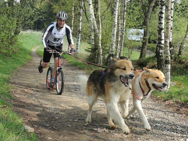 Czech mountain dog and Jarda Svoboda - Racing