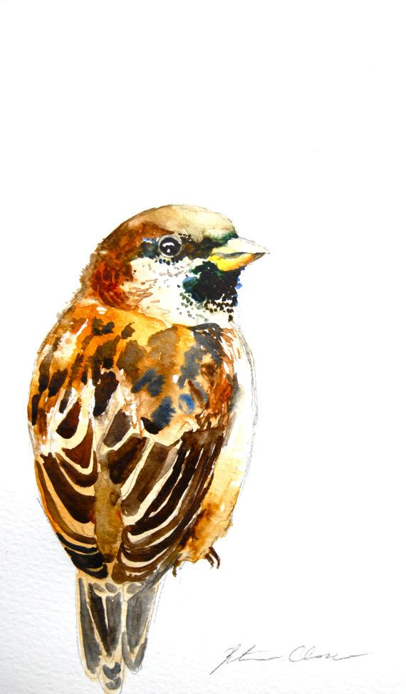 Original watercolor painting of a sparrow. Beautiful washes of blue, brown and deep yellow make this fellow a warm presence in any home. Title: