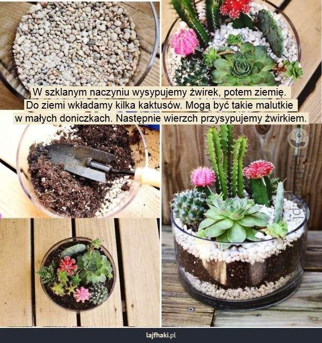 Lajfhaki.pl - W szklanym naczyniu wysypujemy żwirek, potem ziemię.  Do ziemi wkładamy kilka kaktusów. Mogą być takie malutkie  w małych doniczkach. Następnie wierzch przysypujemy żwirkiem.