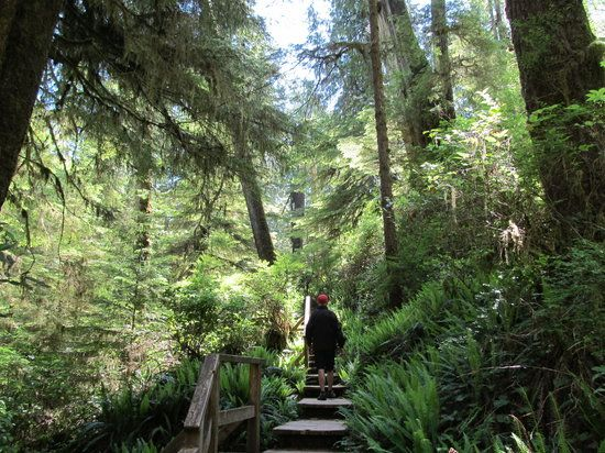 Rainforest Trail, Tofino: See 505 reviews, articles, and 126 photos of Rainforest Trail, ranked No.4 on TripAdvisor among 53 attractions in Tofino.