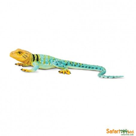 Collared Lizard   Safari Ltd®