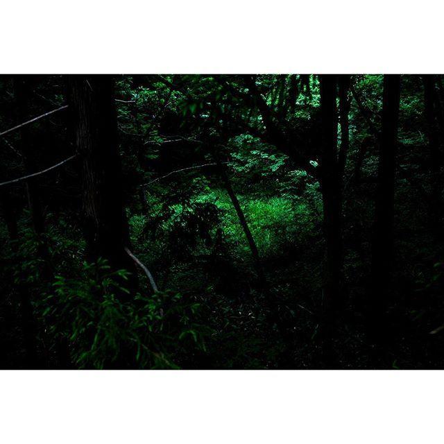 キャプション→森林と光① 自分が単純に気に入った場面の写真を撮る。今回は森の中、木漏れ日を探してきました。 . 人が立ち入り難い崖を少し下ると小さな湿地があり、そこだけが明るすぎない強さで照らされていた。そこに行ってみたくなるが、近づけない。そこに立ったからといって何かが変わるわけではないが、掻き立てる… . こーゆうエゴイスト的な写真は難しい。おそらくほとんどの人はスルーしてしまうだろう。インスタ的には、照らされた所に動物や人が立つのだろう(笑) . . #写真好きな人と繋がりたい #ファインダー越しの私の世界 #スズロ寫眞部 #nikon #nikonphotography #nikond800 #nikon35mm  #far_eastphotography  #ig_photooftheday #instagramjapan #RECO_ig #lovers_nippon #tokyocameraclub #perfocal  #icu_japan #japan_daytime_view #as_archive #hueart_life…