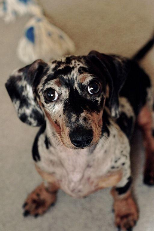 5 motivos cachorro não presta atenção em você