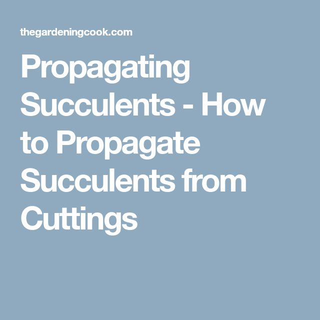 Propagating Succulents - How to Propagate Succulents from Cuttings