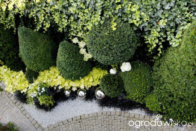 Ogród nie tylko bukszpanowy - część III - strona 385 - Forum ogrodnicze - Ogrodowisko