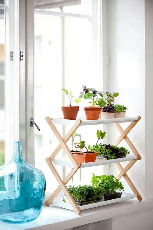 Sencilla decoración con plantas #decoración #plantas