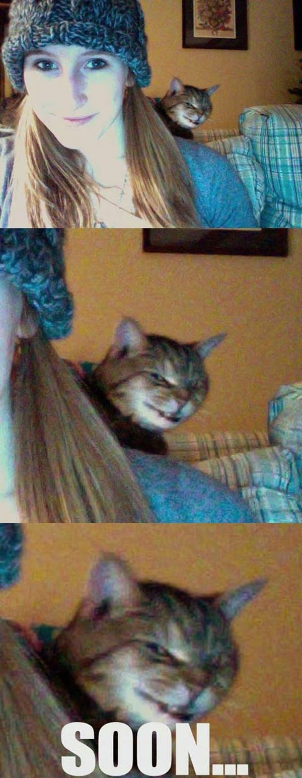 The most evil looking cat I've ever seen! 25 Pics ... http://fb.me/humorwithin