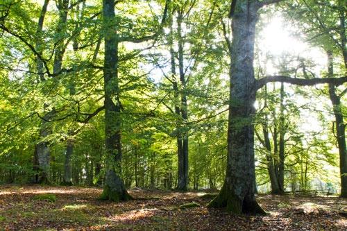 Autumn in the forest, Kvänsås Bokskog, Eksjö, Sweden