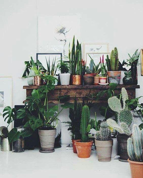Plantes botanical idée déco jardin dintérieur homegarden cactus http
