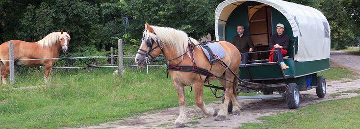 Liesje Trecking Uckermark, Natur und Pferde Infos bei www.barumscout.de