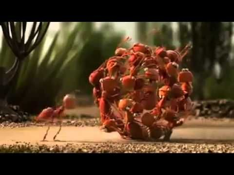 Funny Video - Unity is strength -