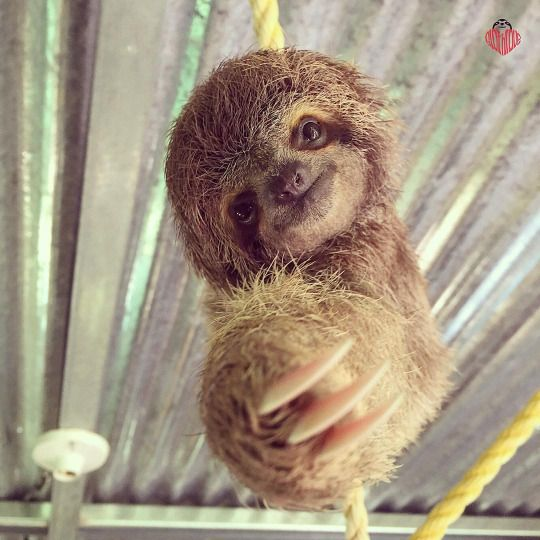 He's reaching for a hug, how can you say no?