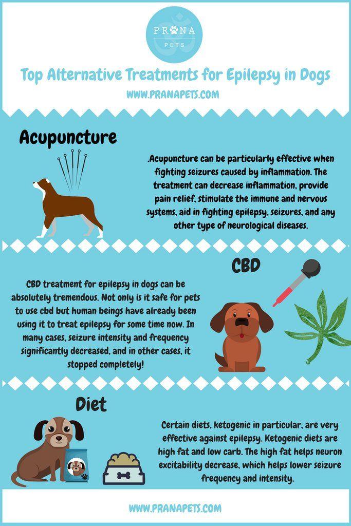 Top Alternative Treatments For Epilepsy In Dogs Epilepsy In Dogs