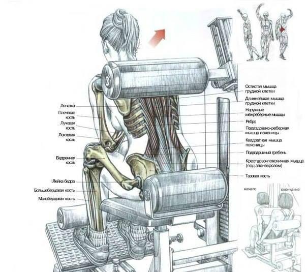 Разгибания туловища на тренажёре  Сидя на тренажере. Туловище наклонить вперед. Валик тренажера поместить на уровне лопаток: сделать вдох и максимально выпрямить туловище, затем медленно вернуться в исходное положение; по окончании движения сделать выдох. Это упражнение разрабатывает мышцы, выпрямляющие позвоночник, локализуя нагрузку в нижней части спины, прежде всего - на крестцово-поясничной группе остистых мышц.