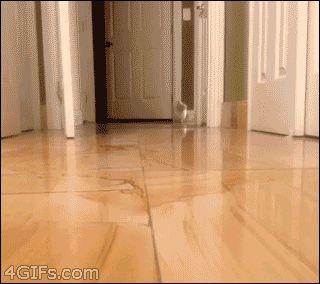 Corgi Kitty!
