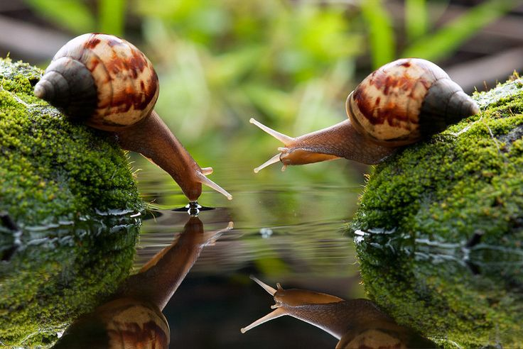 Thirsty Snails